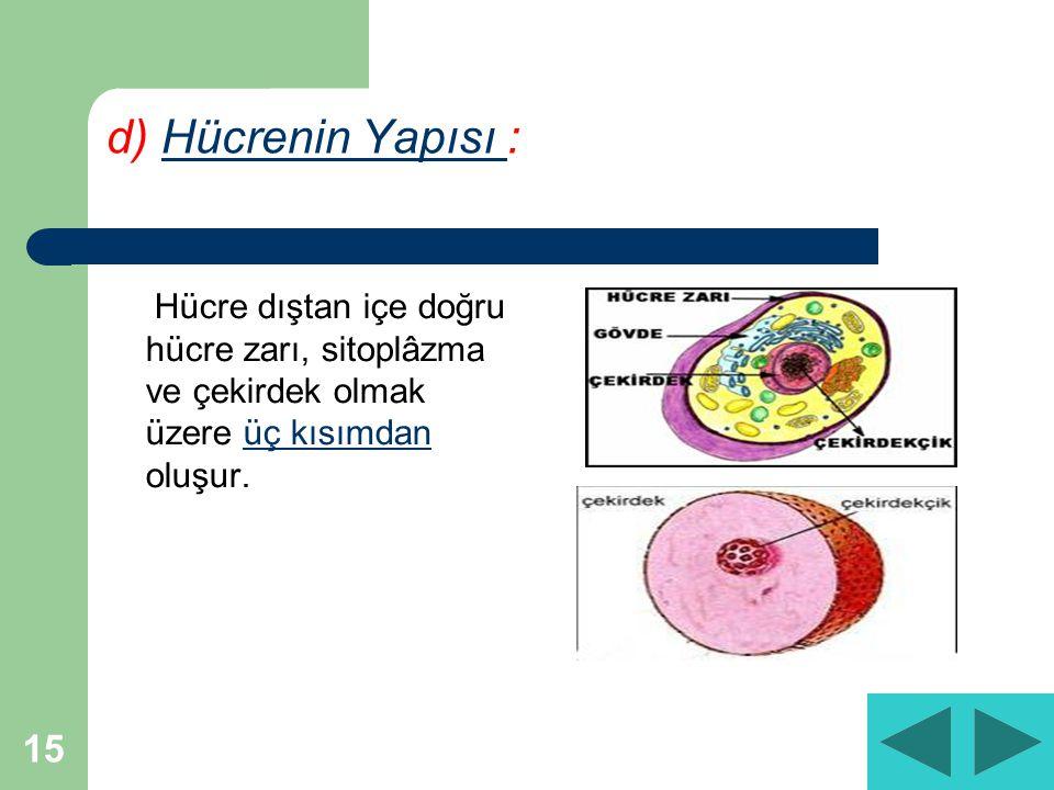 d) Hücrenin Yapısı : Hücre dıştan içe doğru hücre zarı, sitoplâzma ve çekirdek olmak üzere üç kısımdan oluşur.