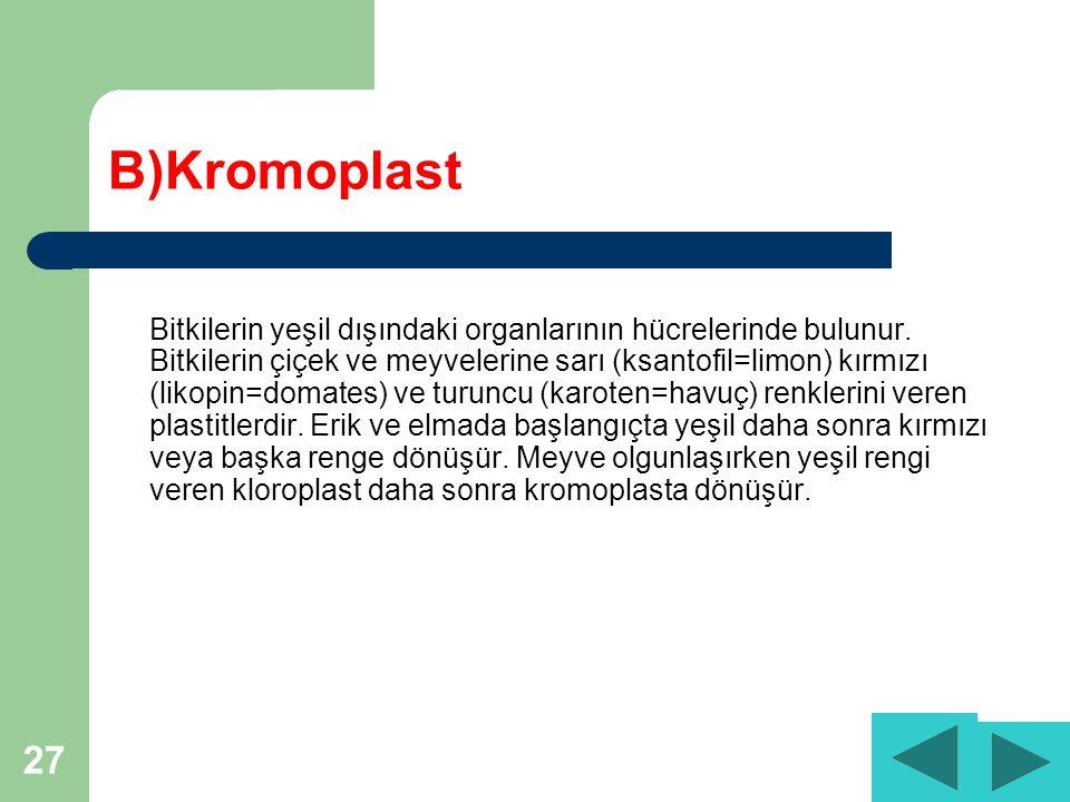 B)Kromoplast