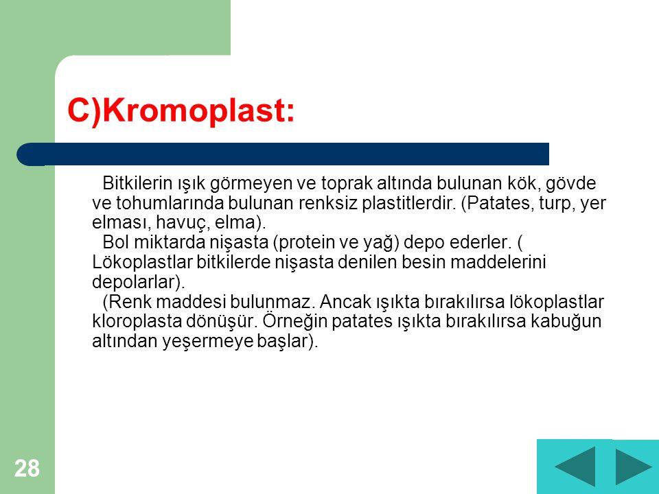 C)Kromoplast: