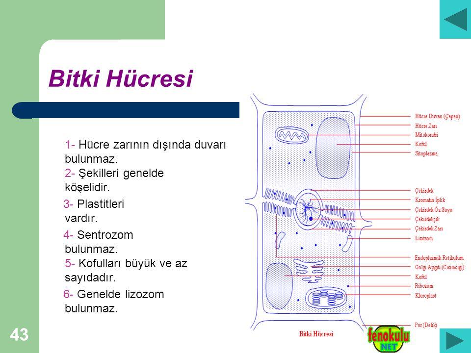 Bitki Hücresi