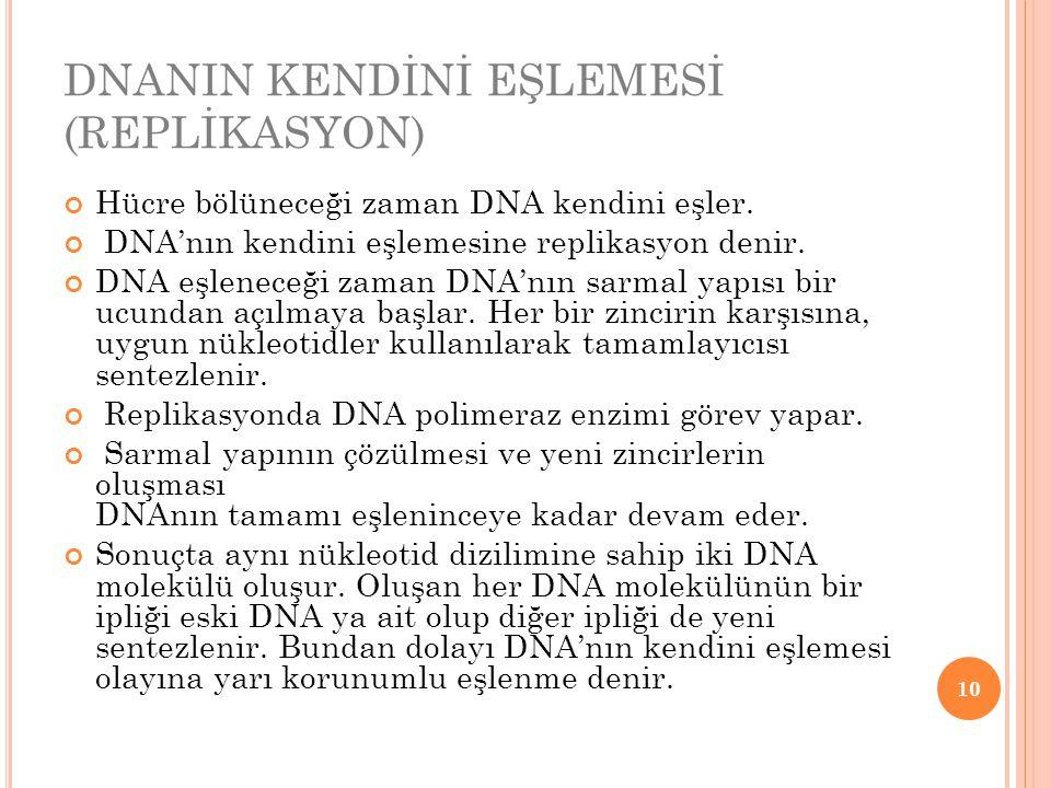DNANIN KENDİNİ EŞLEMESİ (REPLİKASYON)
