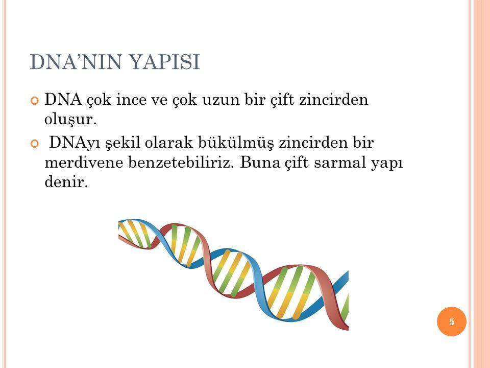 DNA'NIN YAPISI DNA çok ince ve çok uzun bir çift zincirden oluşur.