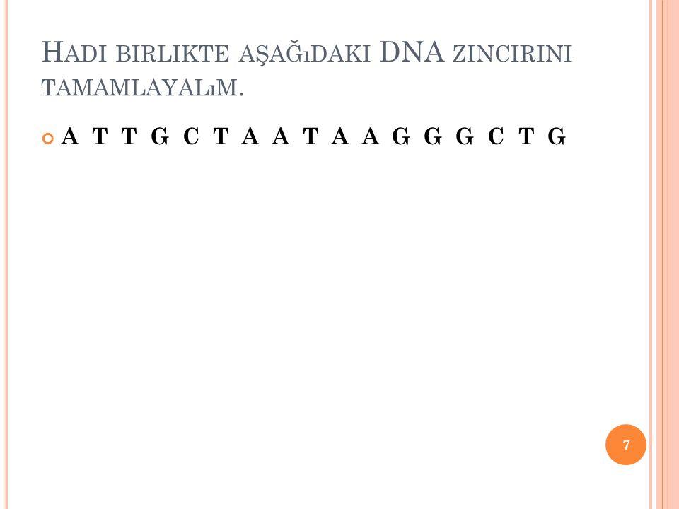 Hadi birlikte aşağıdaki DNA zincirini tamamlayalım.
