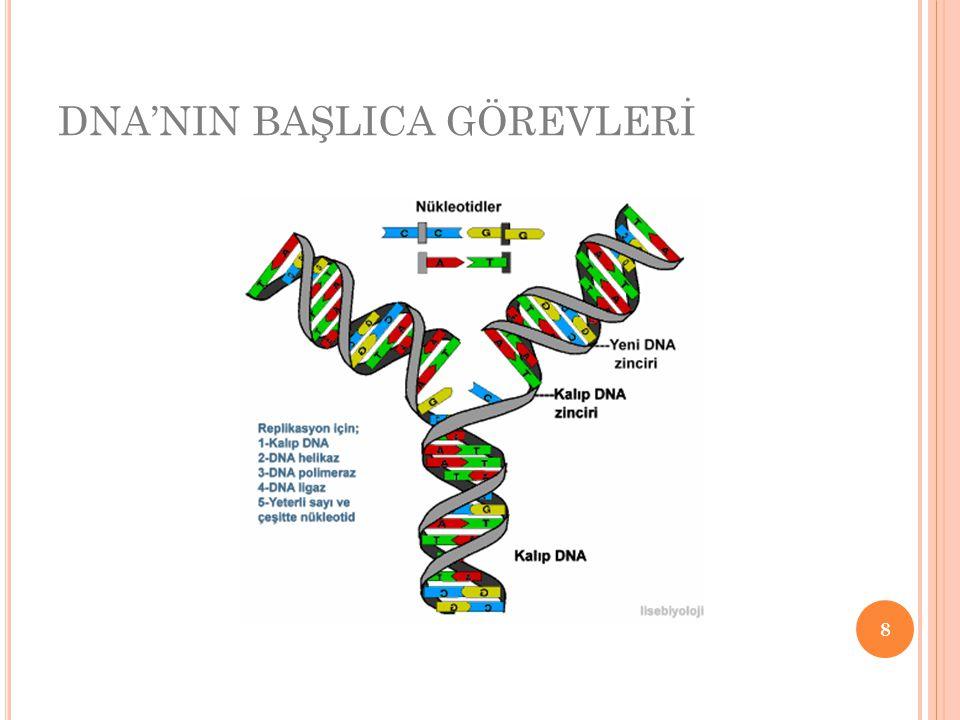 DNA'NIN BAŞLICA GÖREVLERİ