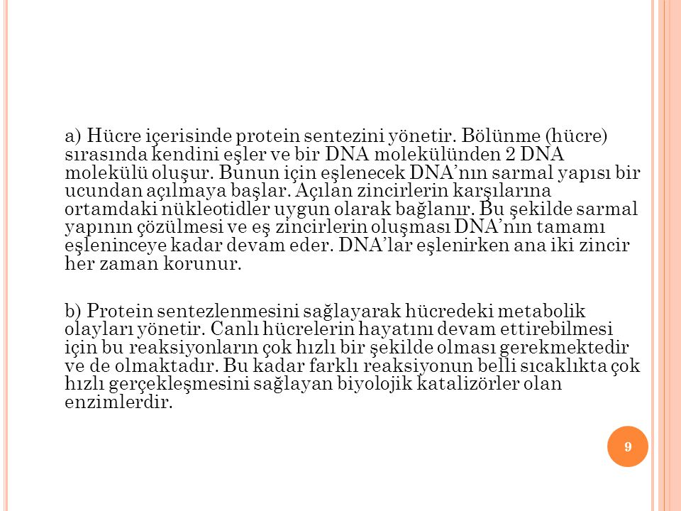 a) Hücre içerisinde protein sentezini yönetir