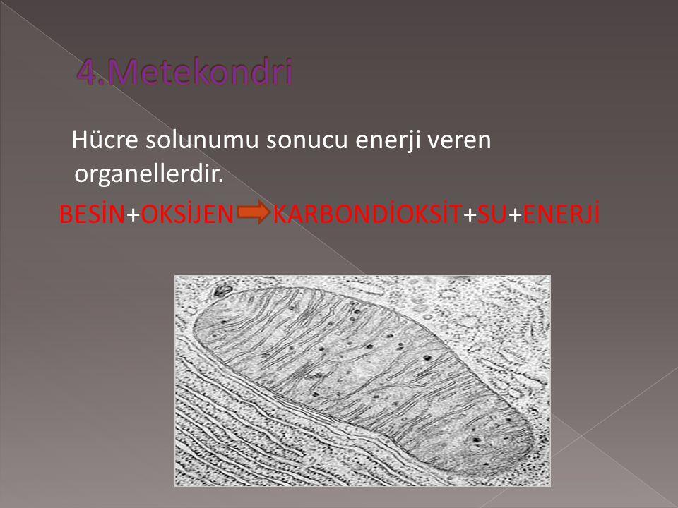 4.Metekondri Hücre solunumu sonucu enerji veren organellerdir.