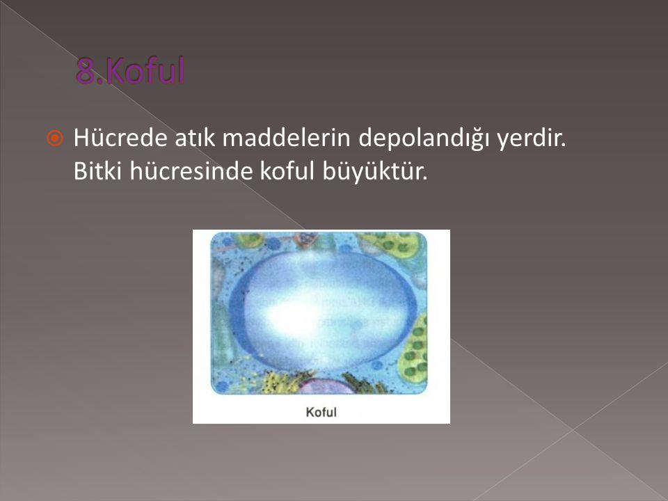 8.Koful Hücrede atık maddelerin depolandığı yerdir. Bitki hücresinde koful büyüktür.