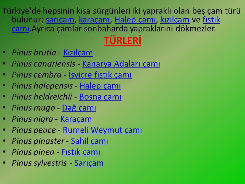 Türkiye de hepsinin kısa sürgünleri iki yapraklı olan beş çam türü bulunur; sarıçam, karaçam, Halep çamı, kızılçam ve fıstık çamı.Ayrıca çamlar sonbaharda yapraklarını dökmezler.