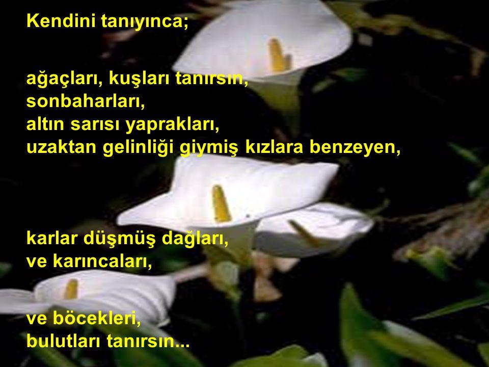 Kendini tanıyınca; ağaçları, kuşları tanırsın, sonbaharları, altın sarısı yaprakları, uzaktan gelinliği giymiş kızlara benzeyen,