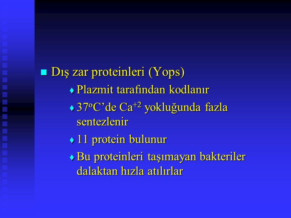 Dış zar proteinleri (Yops)