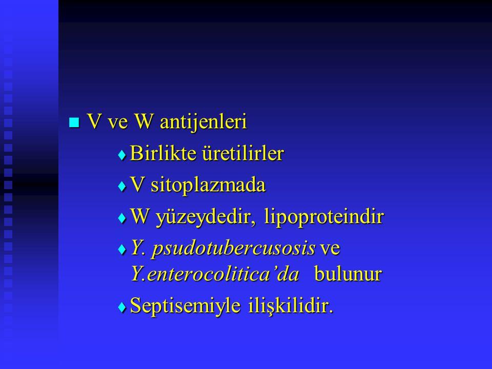 V ve W antijenleri Birlikte üretilirler. V sitoplazmada. W yüzeydedir, lipoproteindir. Y. psudotubercusosis ve Y.enterocolitica'da bulunur.