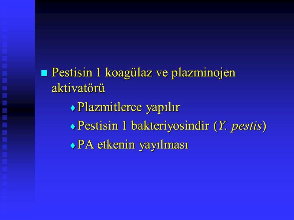 Pestisin 1 koagülaz ve plazminojen aktivatörü