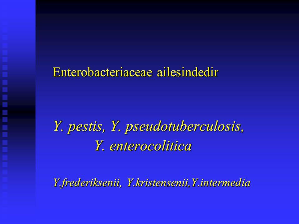Y. pestis, Y. pseudotuberculosis, Y. enterocolitica