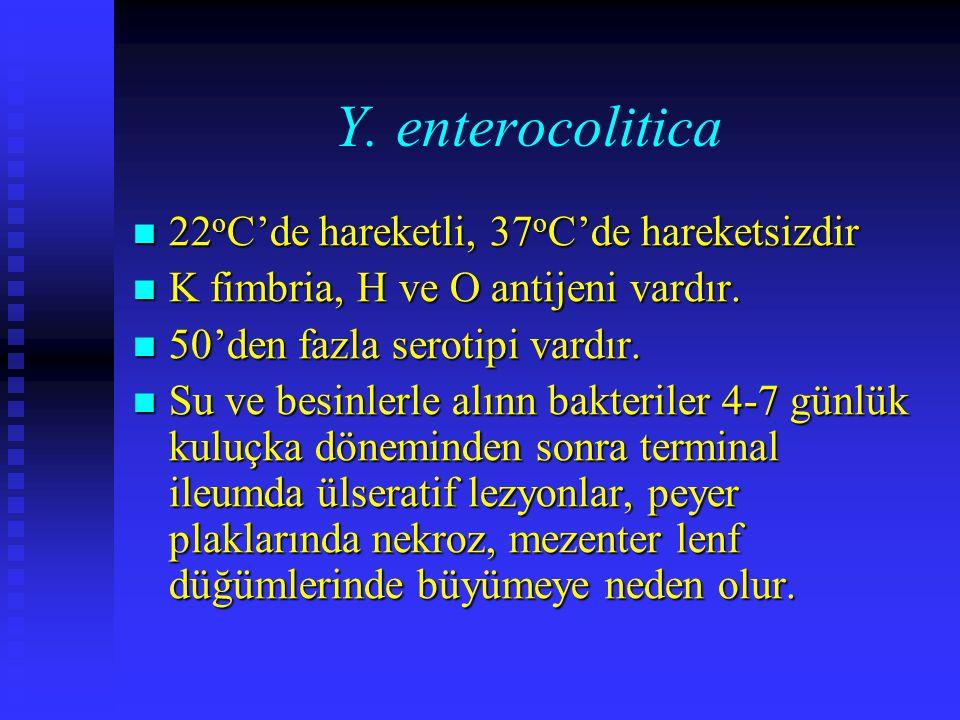 Y. enterocolitica 22oC'de hareketli, 37oC'de hareketsizdir