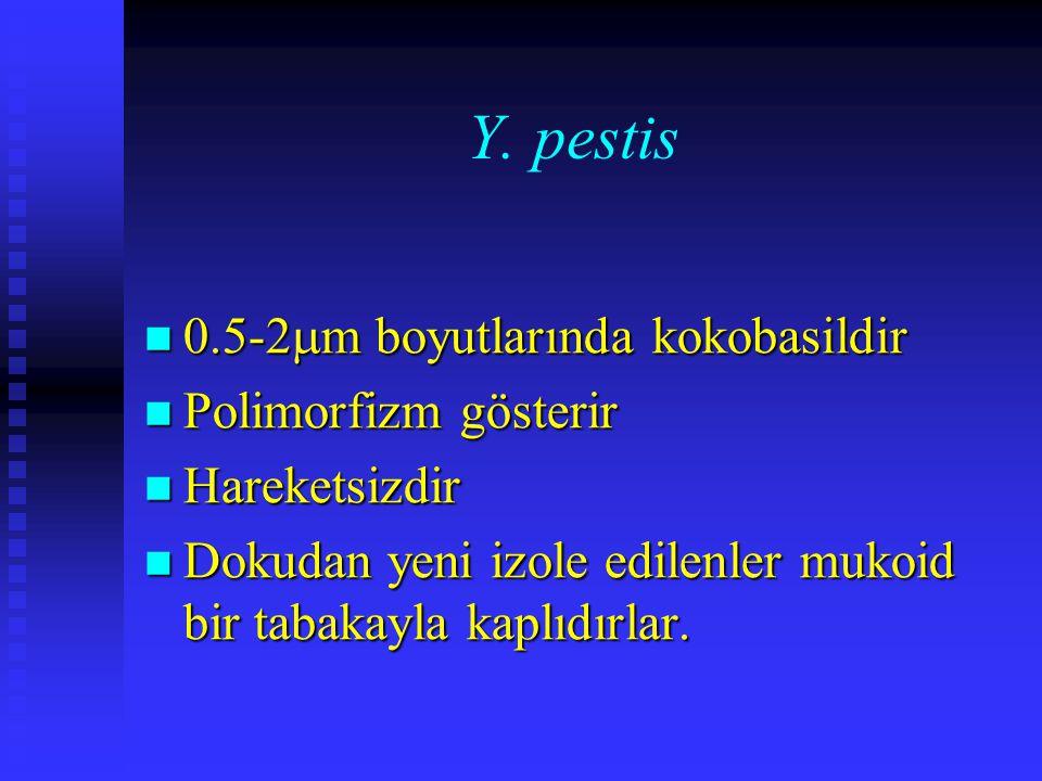 Y. pestis 0.5-2m boyutlarında kokobasildir Polimorfizm gösterir
