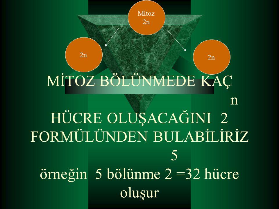 Mitoz 2n. 2n. 2n.