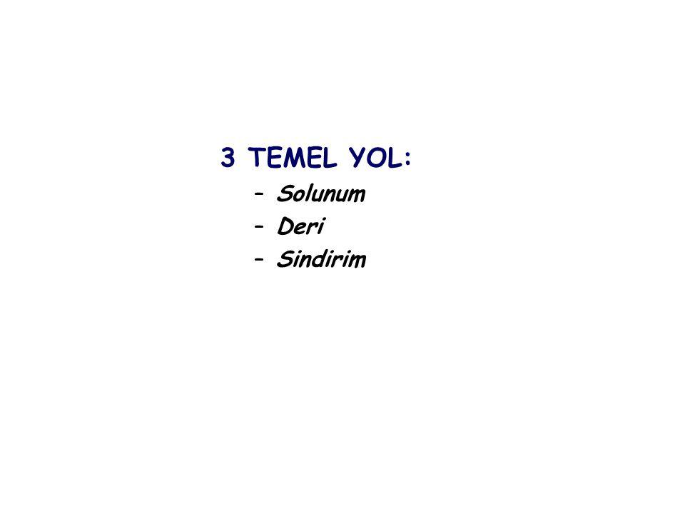 3 TEMEL YOL: Solunum Deri Sindirim