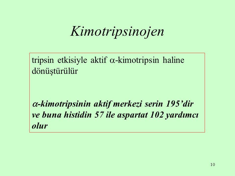 Kimotripsinojen tripsin etkisiyle aktif -kimotripsin haline dönüştürülür.