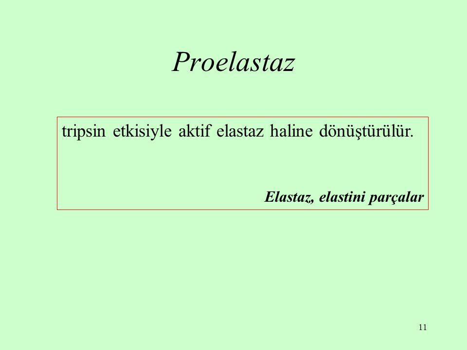 Proelastaz tripsin etkisiyle aktif elastaz haline dönüştürülür.