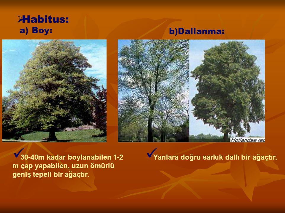 Habitus: a) Boy: b)Dallanma:
