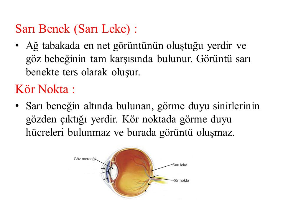 Sarı Benek (Sarı Leke) :