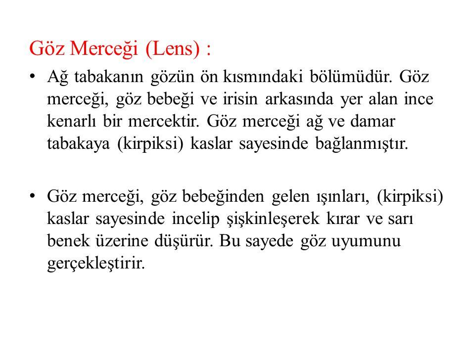 Göz Merceği (Lens) :