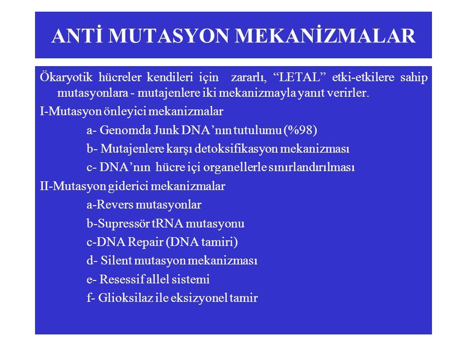 ANTİ MUTASYON MEKANİZMALAR