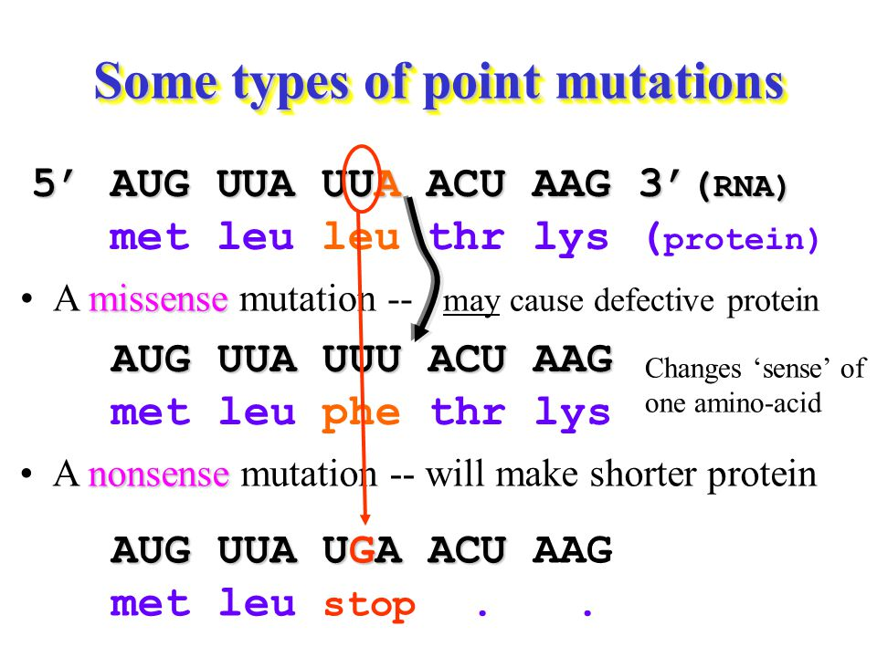 Some types of point mutations