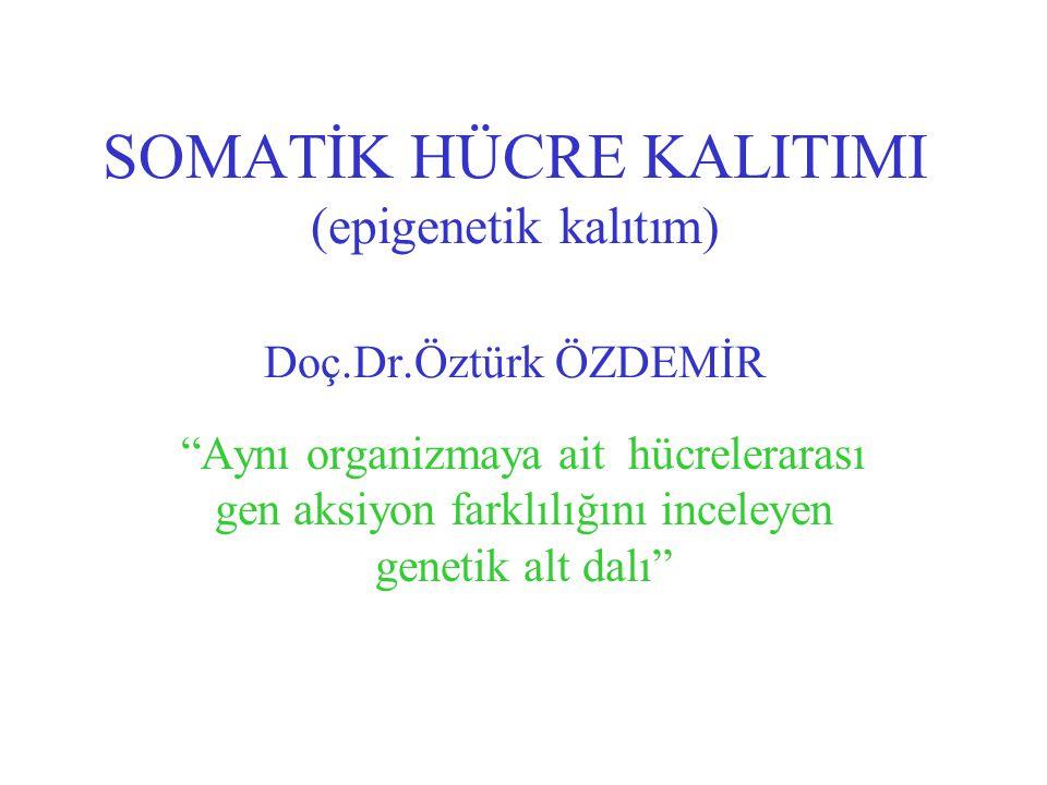 SOMATİK HÜCRE KALITIMI (epigenetik kalıtım) Doç.Dr.Öztürk ÖZDEMİR