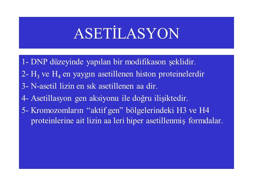 ASETİLASYON 1- DNP düzeyinde yapılan bir modifikason şeklidir.