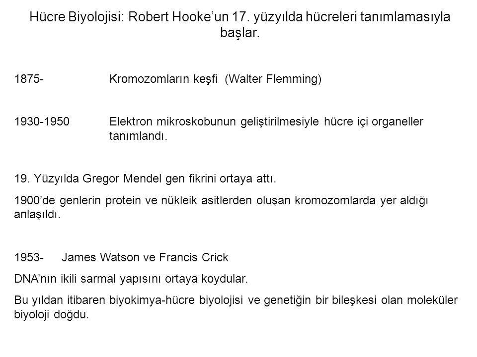 Hücre Biyolojisi:. Robert Hooke'un 17