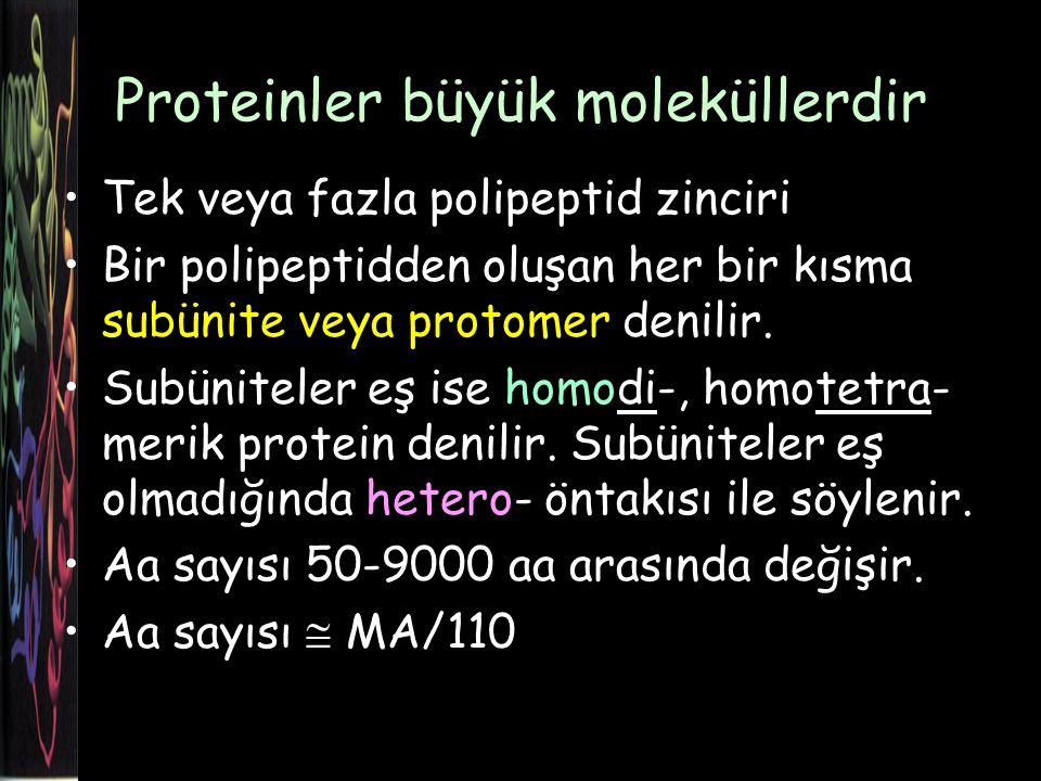 Proteinler büyük moleküllerdir