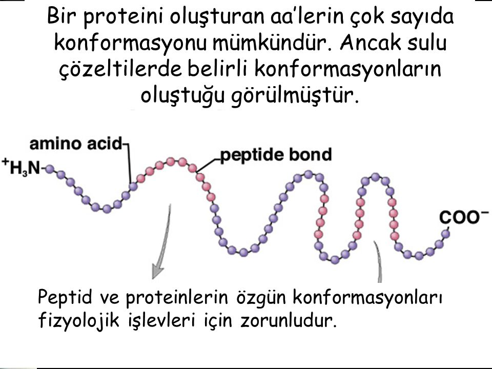 Bir proteini oluşturan aa'lerin çok sayıda