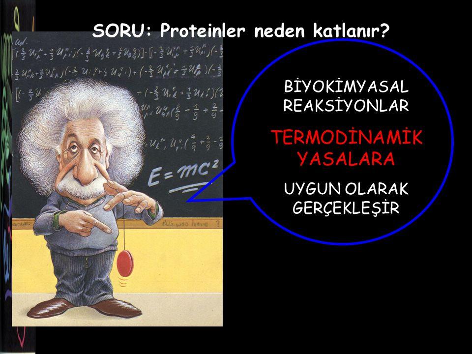 SORU: Proteinler neden katlanır