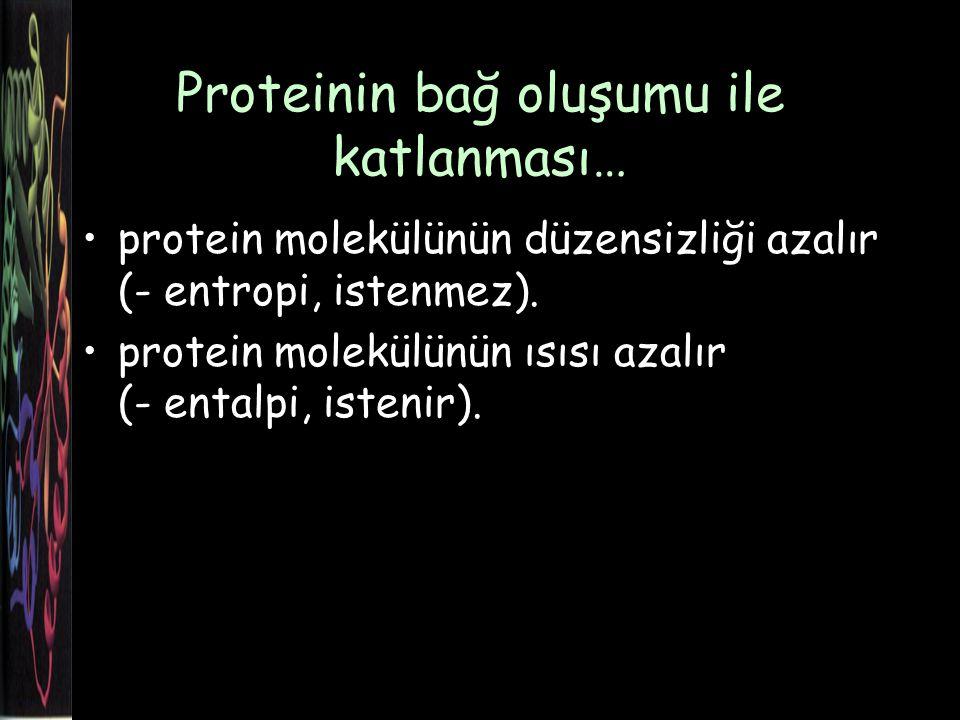 Proteinin bağ oluşumu ile katlanması…