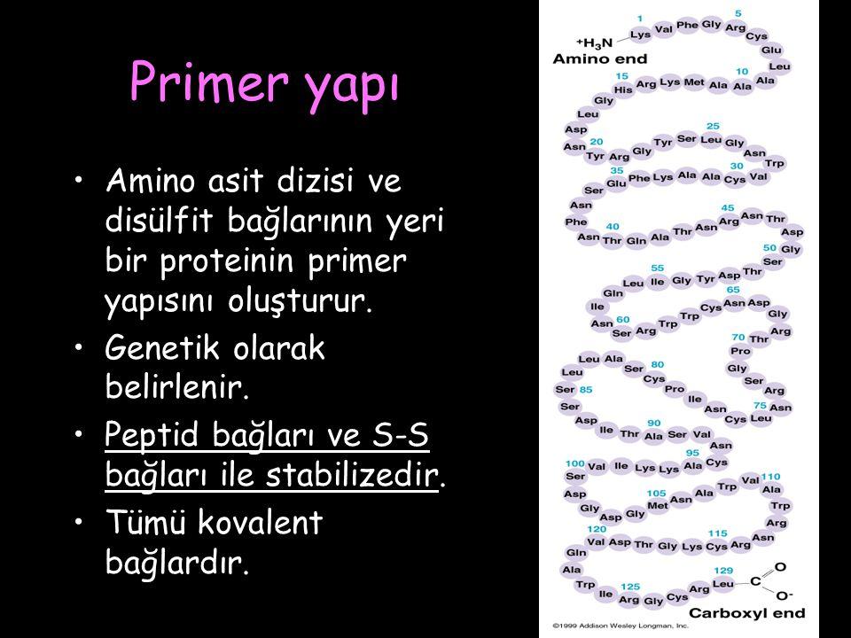 Primer yapı Amino asit dizisi ve disülfit bağlarının yeri bir proteinin primer yapısını oluşturur. Genetik olarak belirlenir.