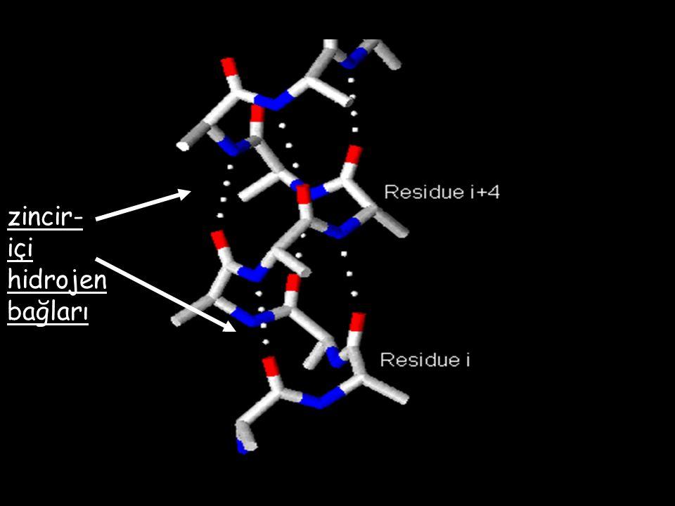 zincir-içi hidrojen bağları