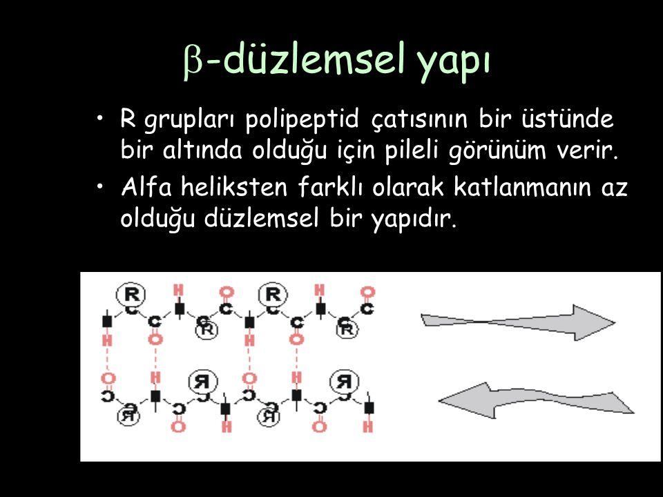 -düzlemsel yapı R grupları polipeptid çatısının bir üstünde bir altında olduğu için pileli görünüm verir.