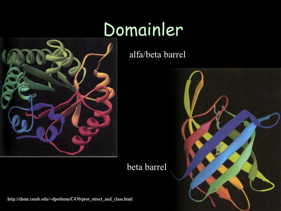 Domainler alfa/beta barrel beta barrel
