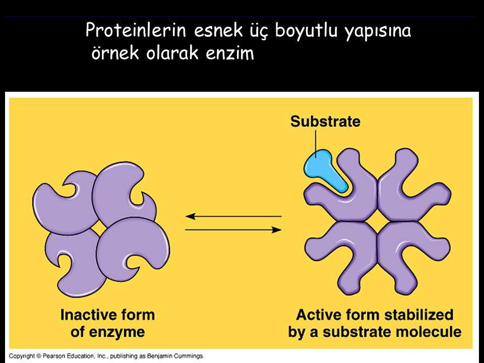 Proteinlerin esnek üç boyutlu yapısına