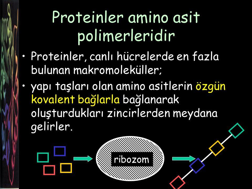 Proteinler amino asit polimerleridir