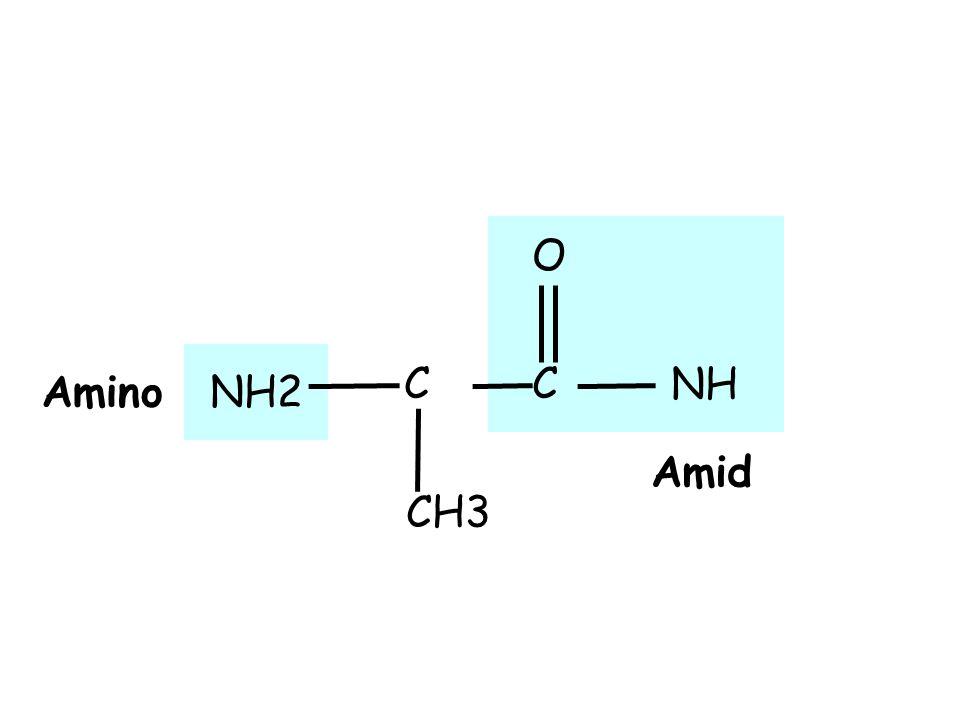 O NH NH2 Amino C C Amid CH3