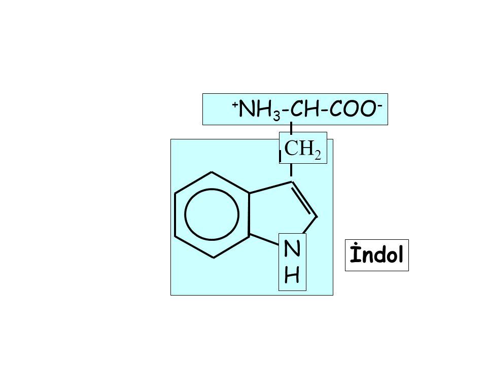 N H +NH3-CH-COO- CH2 İndol