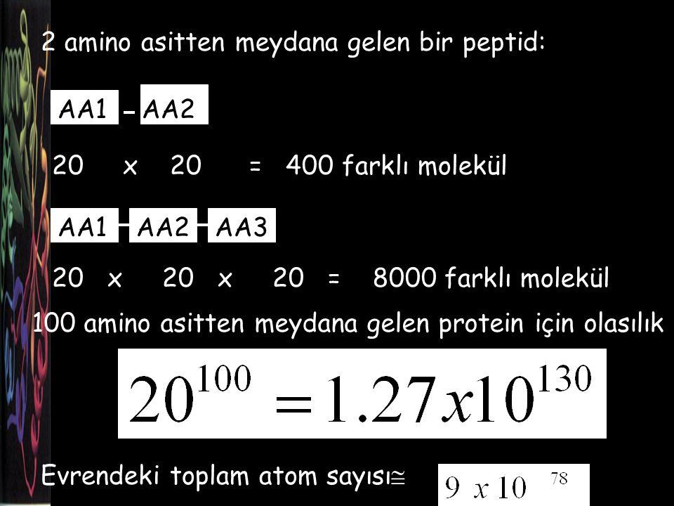 2 amino asitten meydana gelen bir peptid: