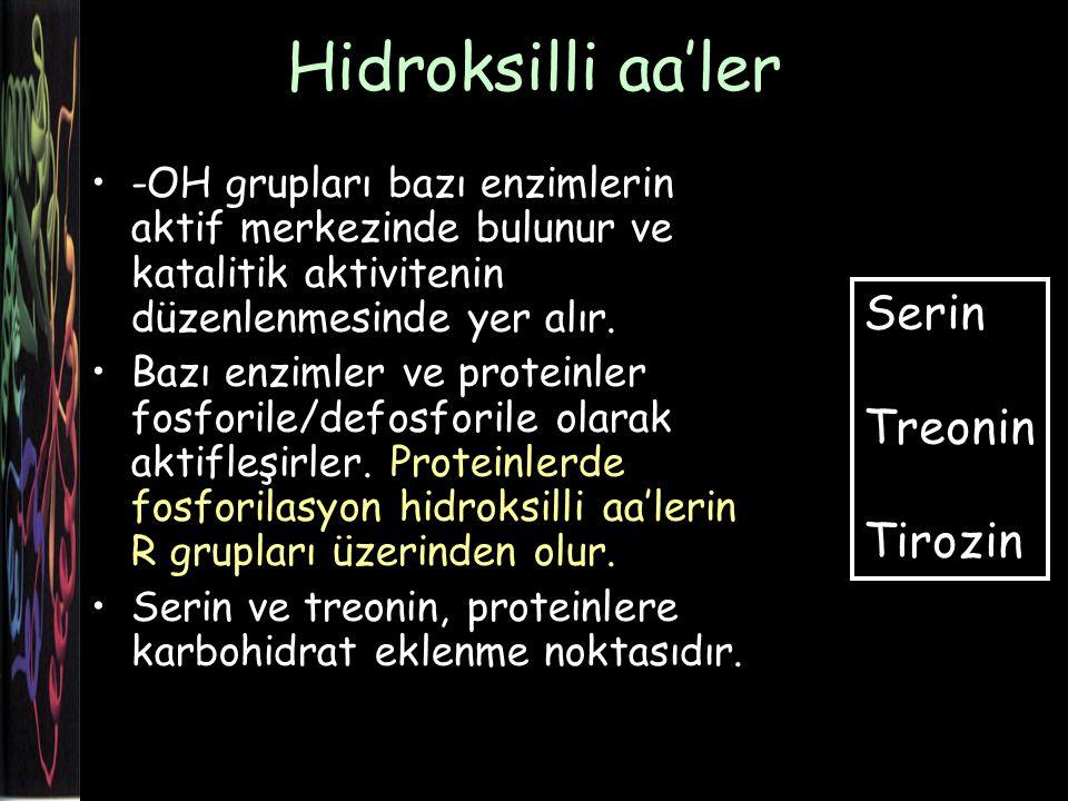 Hidroksilli aa'ler Serin Treonin Tirozin