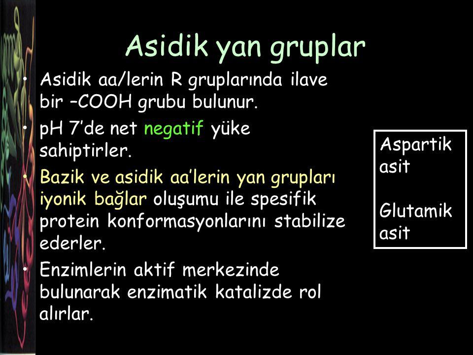 Asidik yan gruplar Asidik aa/lerin R gruplarında ilave bir –COOH grubu bulunur. pH 7'de net negatif yüke sahiptirler.