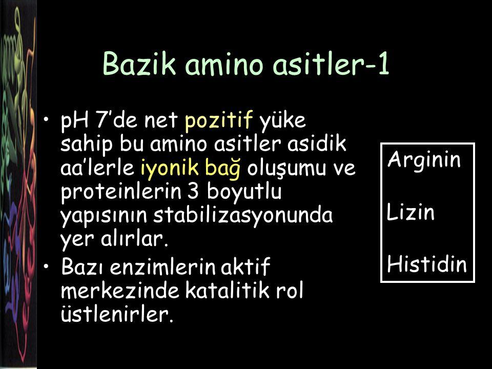 Bazik amino asitler-1
