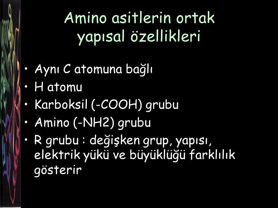 Amino asitlerin ortak yapısal özellikleri