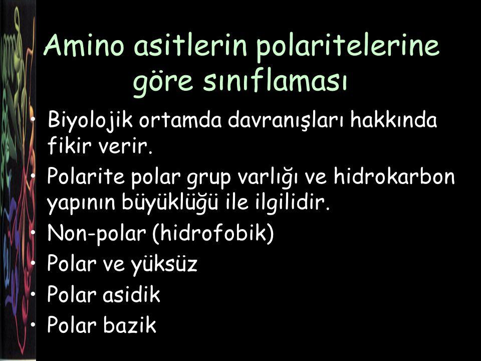 Amino asitlerin polaritelerine göre sınıflaması