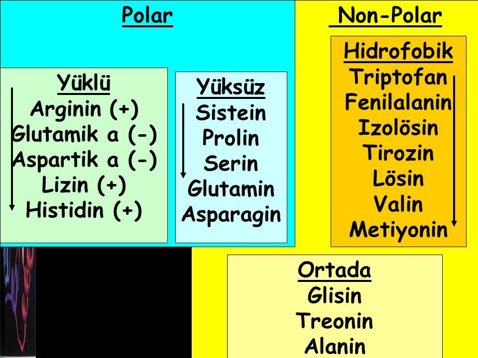 Polar Non-Polar. Hidrofobik. Triptofan. Fenilalanin. Izolösin. Tirozin. Lösin. Valin. Metiyonin.